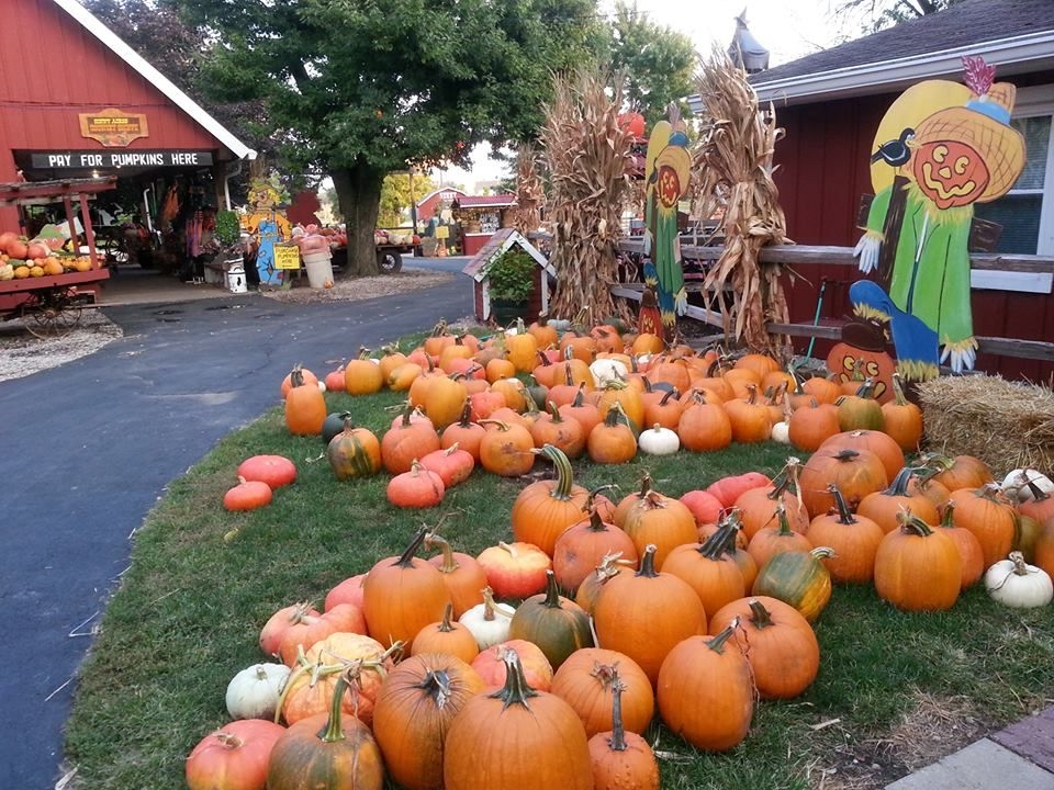 Road Trip Best Pumpkin Patches In Illinois Chicago Food Authority